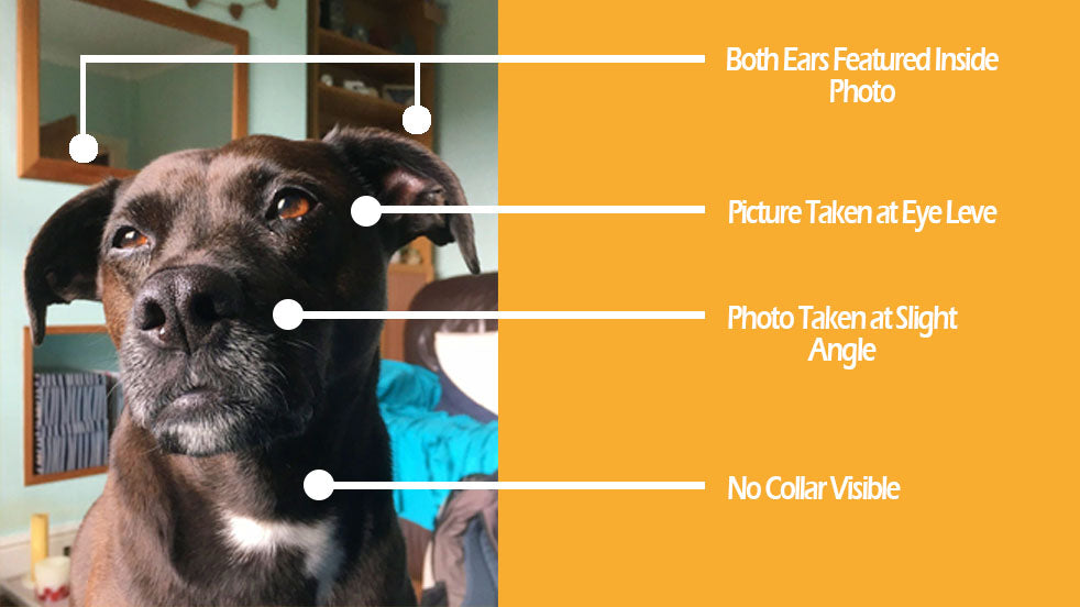 Pet photo guidelines