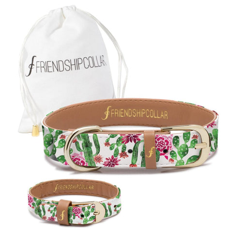 Friendship Collar - Prickly Pup