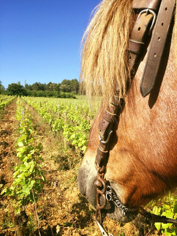 Organic farming in Burgundy by family horses