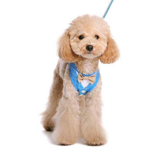 EasyGO Bowtie Blue Harness