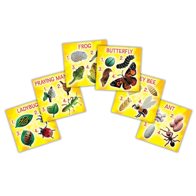 Yellow sorting cards show all the stages for, ladybug, praying mantis, frog, butterfly, honey bee, ant.