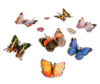 7 shimmering blue, orange, pink and brown 3D butterfly stickers.