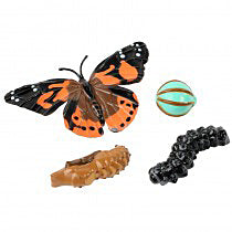 Butterfly Life Cycle Stages - Special Offer!