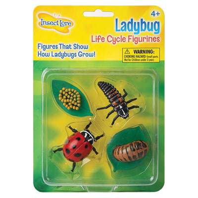 4 ladybug life cycle figurines, eggs, larva, pupa and adult, in Insect Lore packaging.
