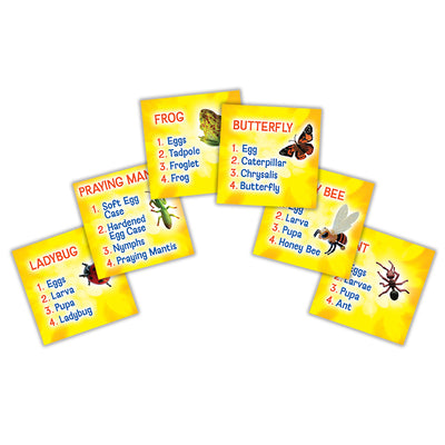 Yellow sorting cards list all the stages for, ladybug, praying mantis, frog, butterfly, honey bee, ant.