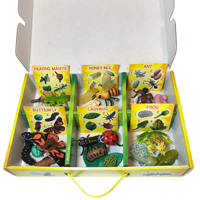 6 life cycle figurine sets with matching sorting cards. Praying mantis, honey bee, ant, butterfly, ladybug, frog.