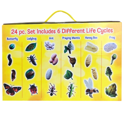 Back of yellow box listing 6 life cycle figurine sets. Butterfly, ladybug, ant, praying mantis, honey bee, frog.