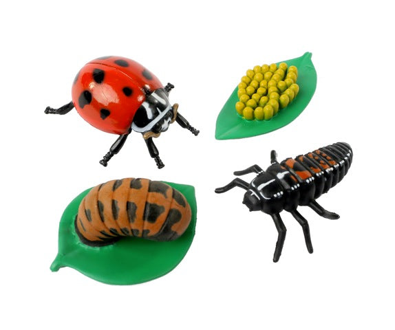 Ladybug Life Cycle Stages - Special Offer!