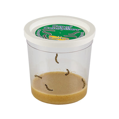Clear cup of five baby caterpillars  with lid and brown food mixture at the bottom.