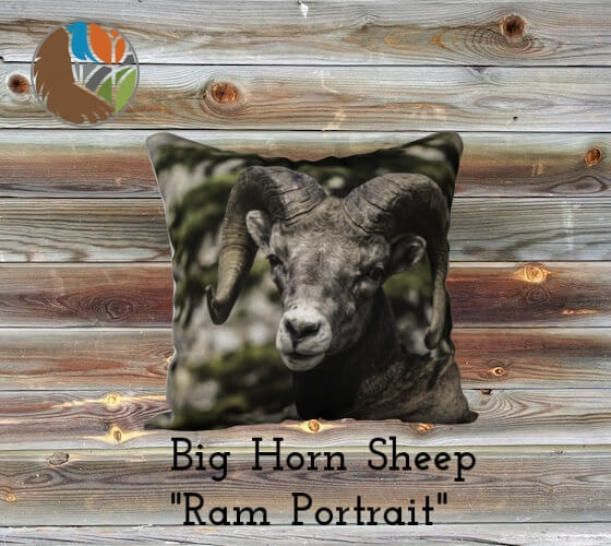 """The Portrait"" Big Horned Sheep Pillow Case"