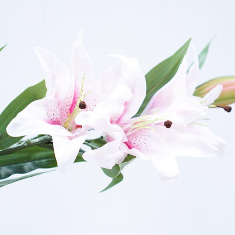 pink-lily-flowers-1