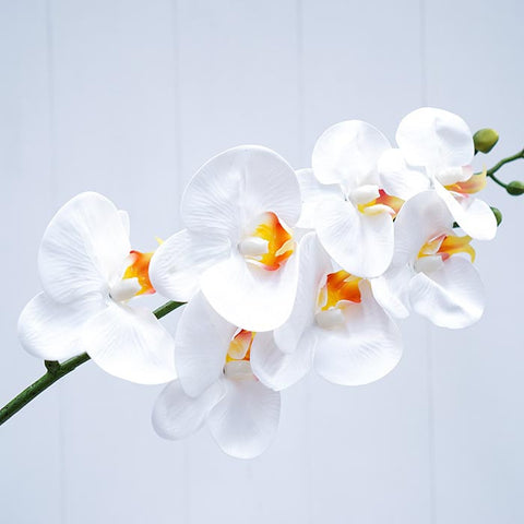 white-orchid-flowers