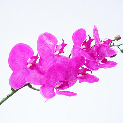 purple-orchid-flowers
