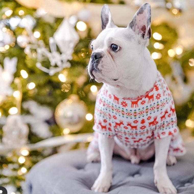 5 Pet Holiday Hazards