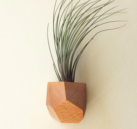 Untitled_Co. Made in USA wooden air plant holder