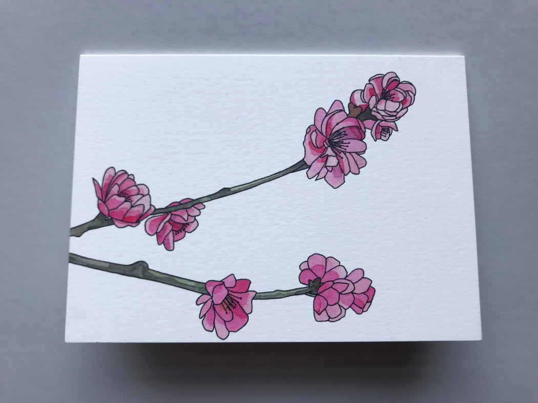 MADE IN USA Flowering Branch Botanical Note Cards by Kate T. Williamson with peach blossoms (momo)
