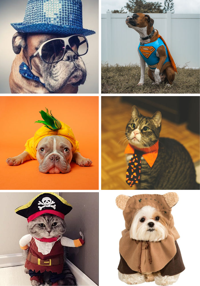pet party costumes dress up photo opportunities ops cat dog