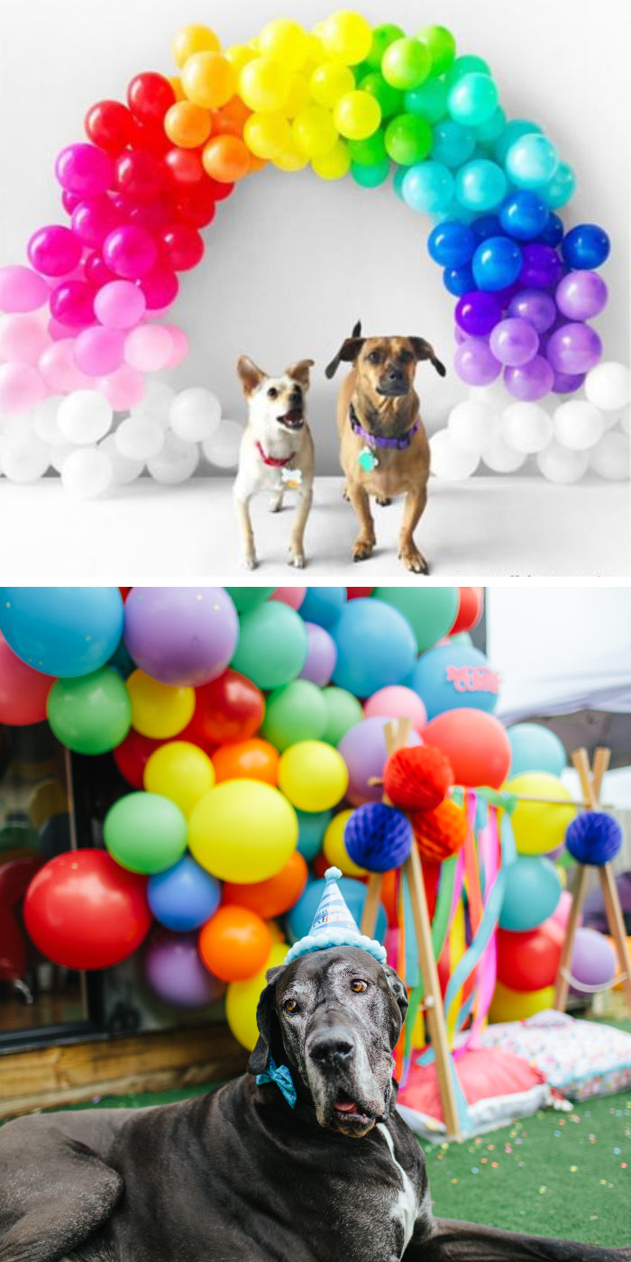 pet party balloon backdrop garland wall