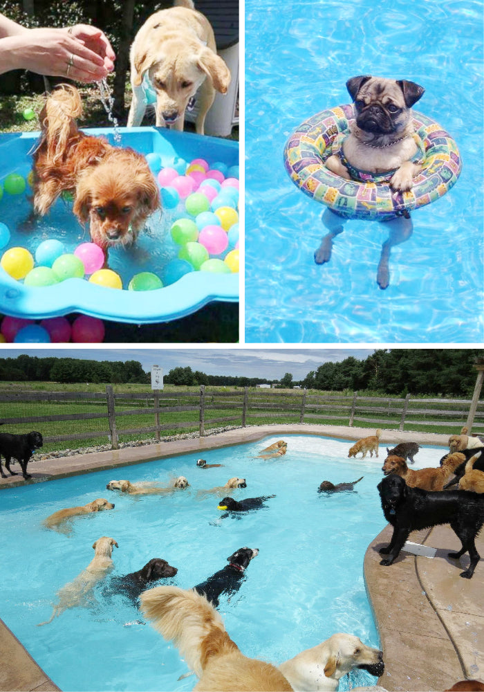 pet party pool party dogs in pool