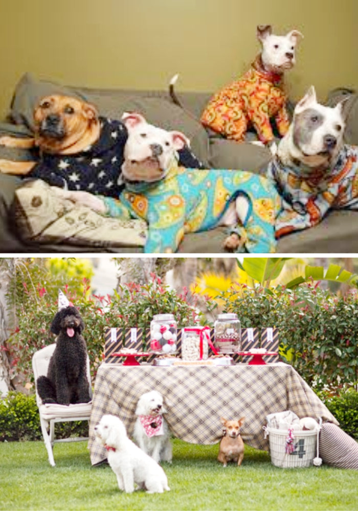 pet party sleepover picnic