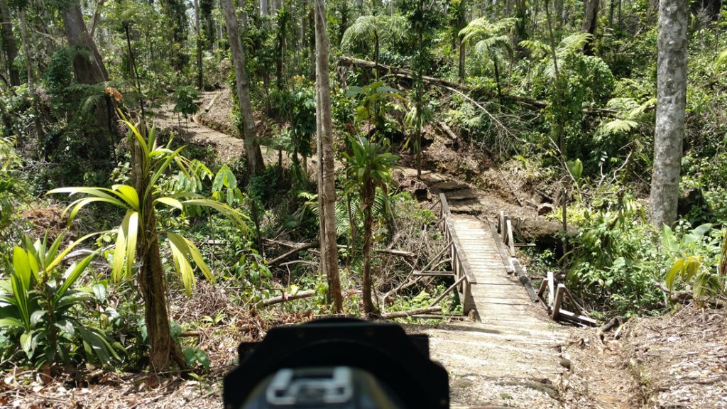 Syndicate Trail after Hurricane Maria