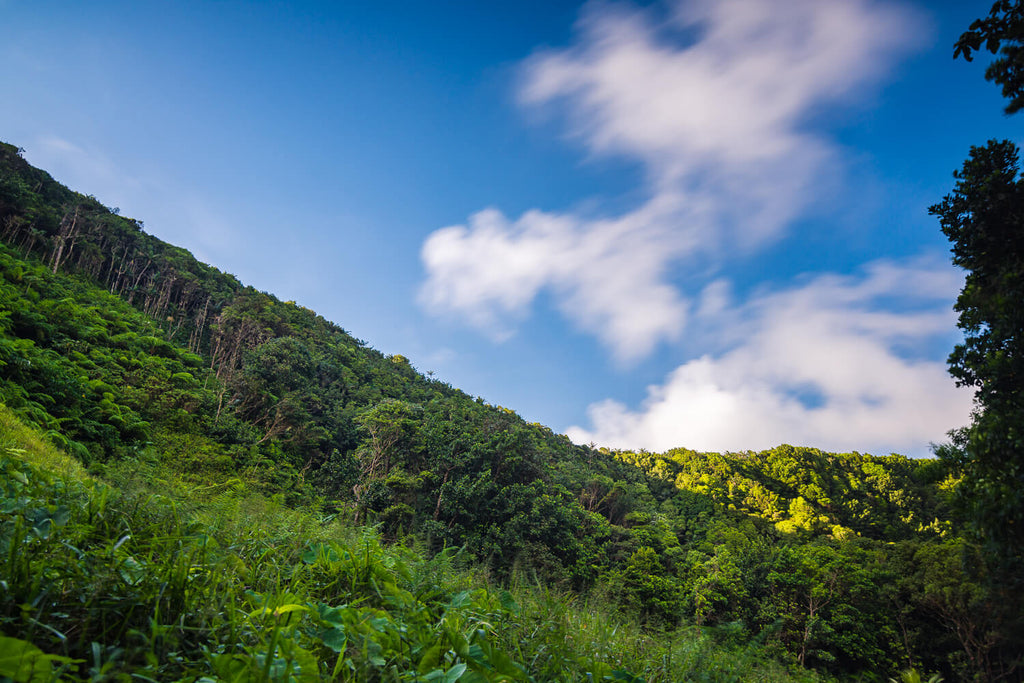 Trail to Cold Soufriere, Dominica