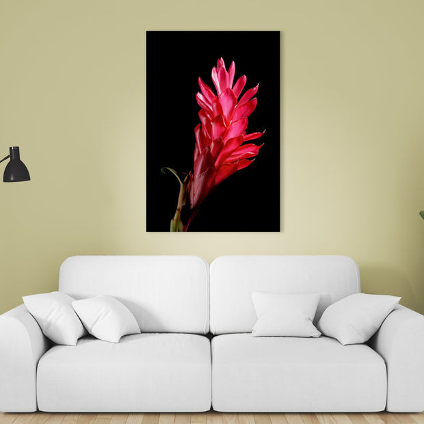Canvas print of Red Ginger I by Yuri A Jones