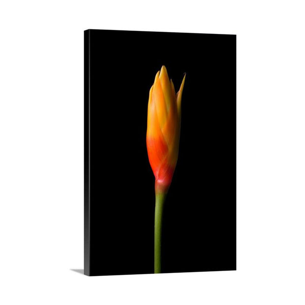 Canvas print of A Single Flame by Yuri A Jones