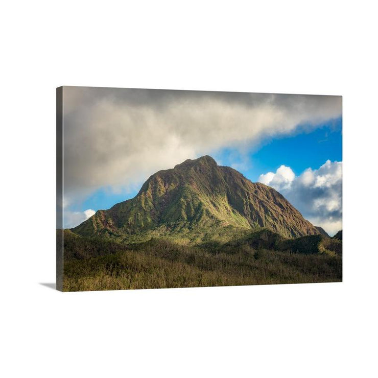 Canvas print of Nearly Barren by Yuri A Jones
