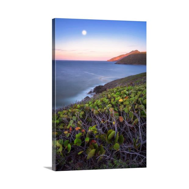 Canvas print of Full Moon by Yuri A Jones
