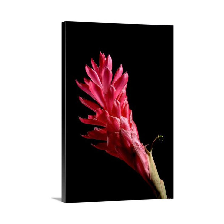 Canvas print of Red Ginger II by Yuri A Jones
