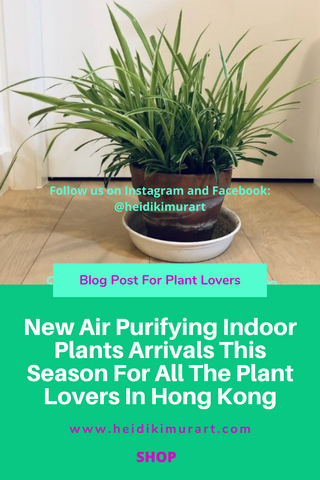 New Air Purifying Indoor Plants Arrivals This Season For All The Plant Lovers In Hong Kong