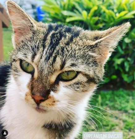 peanut stray meow cat girl poor kitty cats florida