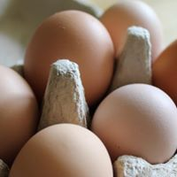 Wallaridge Farm Free Range Eggs - Large (Dozen)