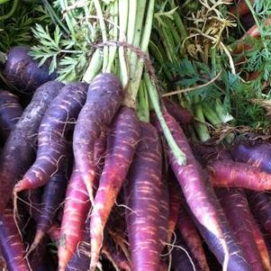 Carrots Dutch Purple (Bunch)