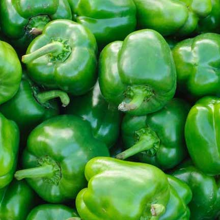 Capsicum Green Large (Each)