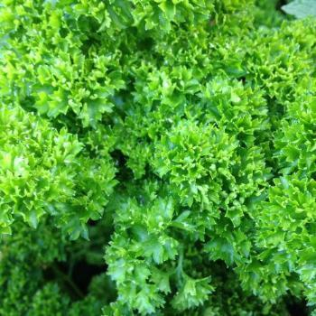 Parsley Small (Bunch)