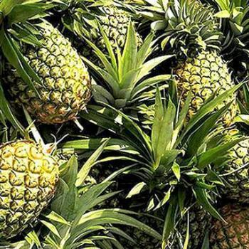 Pineapples (Each)