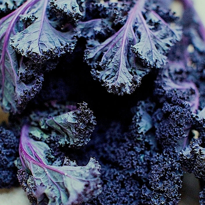 Kale Purple (Bunch)