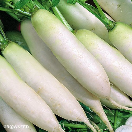 Radish White (Bunch)