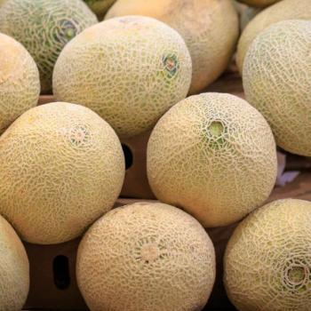 Rockmelon (Each)