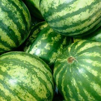 Watermelon Seedless (Kg)