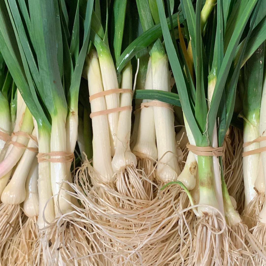 Leeks Baby (Bunch)