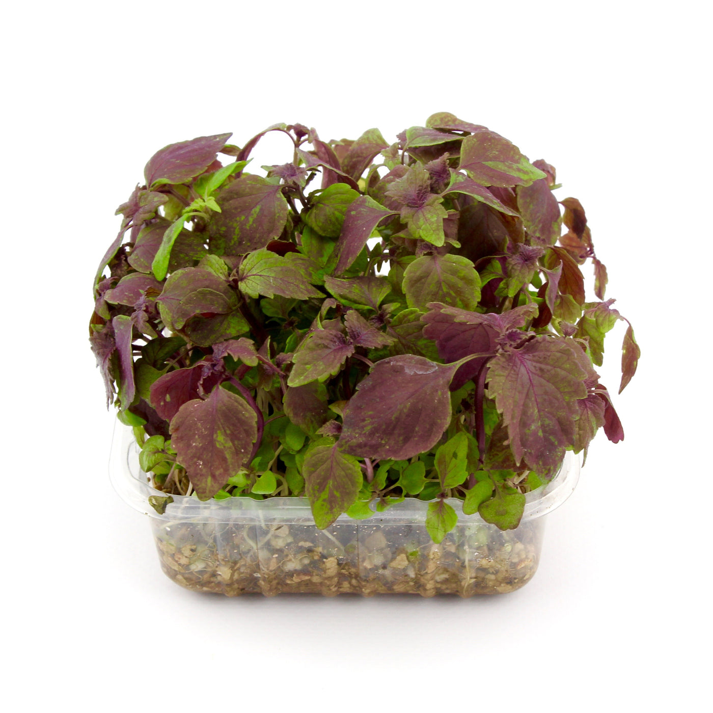 Micro Herbs Red Shiso (Punnet)