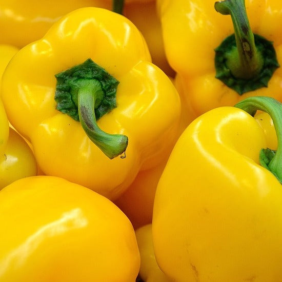 Capsicum Yellow (Each)