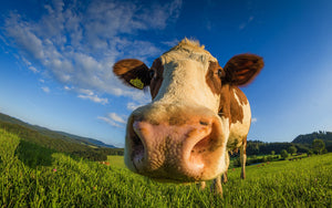 Grass Fed Meat: Latest Trend or Lifetime Friend?