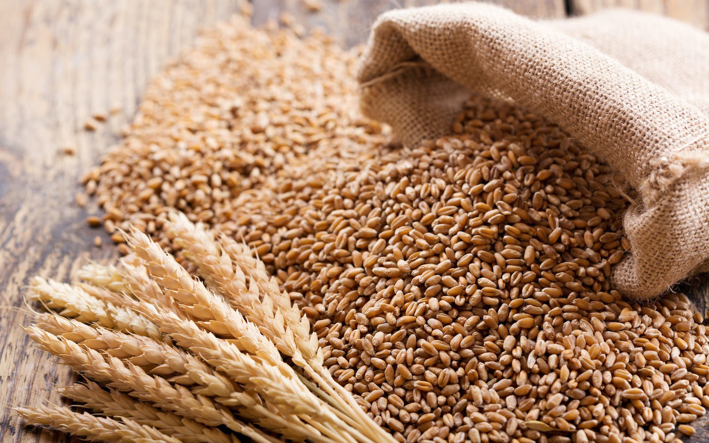 Is wheat bad for you: A burlap bag of wheat spilling out onto a table