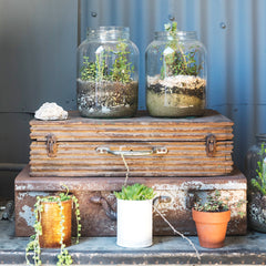 jars on top of a suitcase and plant pots