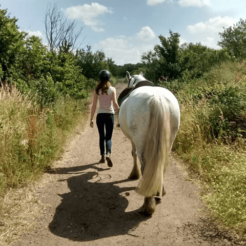 Walk the horse to exercise