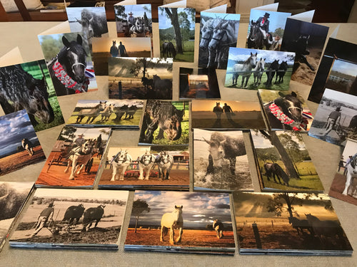 Percheron Greeting Card  10pk